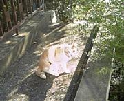 大きい白猫君
